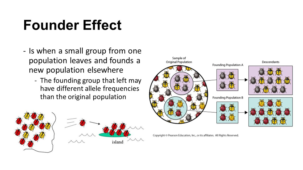 Founder Effect Is when a small group from one population leaves and founds a new population elsewhere.
