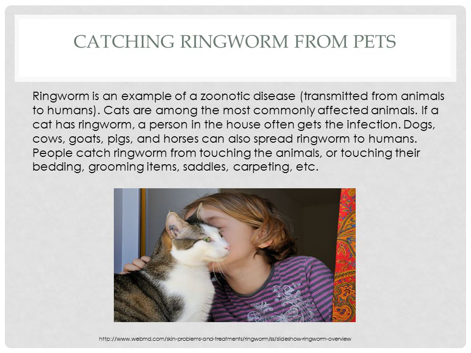 Catching Ringworm From Pets