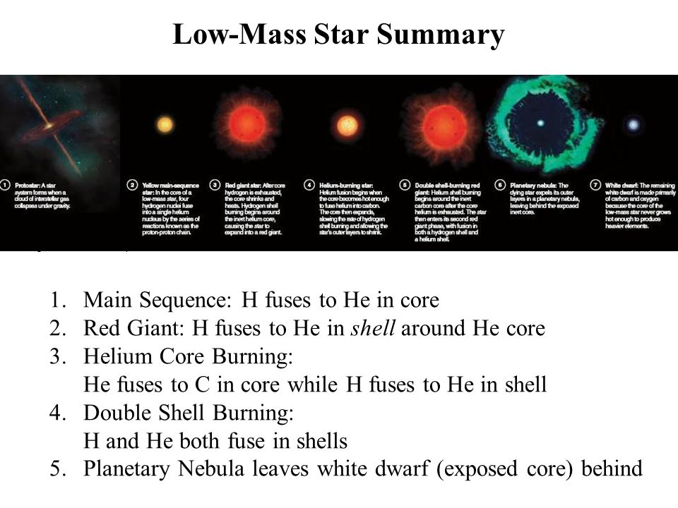 Low-Mass Star Summary Main Sequence: H fuses to He in core