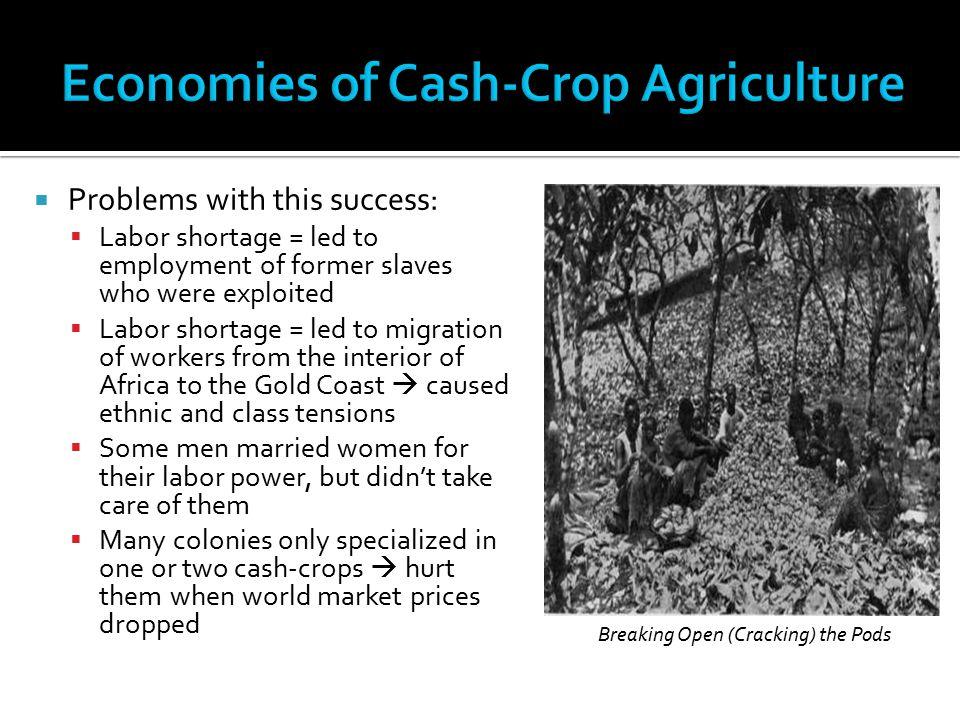 Economies of Cash-Crop Agriculture