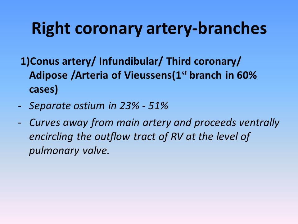 Right coronary artery-branches