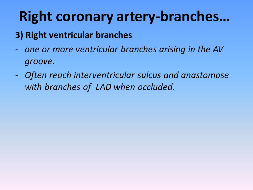 Right coronary artery-branches…