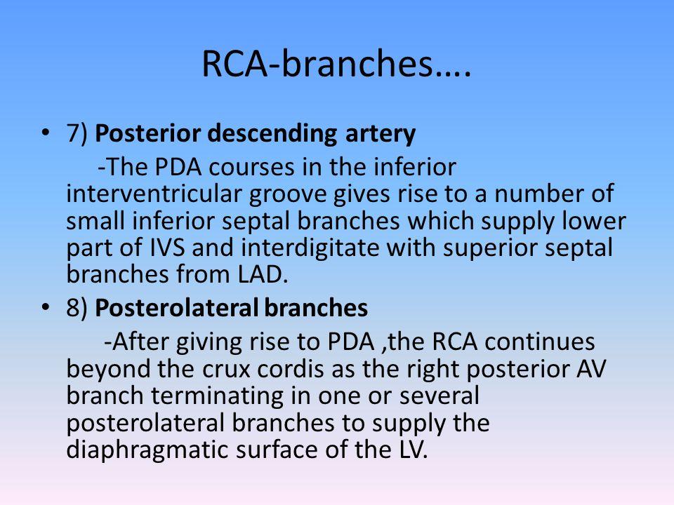RCA-branches…. 7) Posterior descending artery