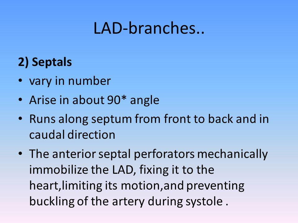 LAD-branches.. 2) Septals vary in number Arise in about 90* angle