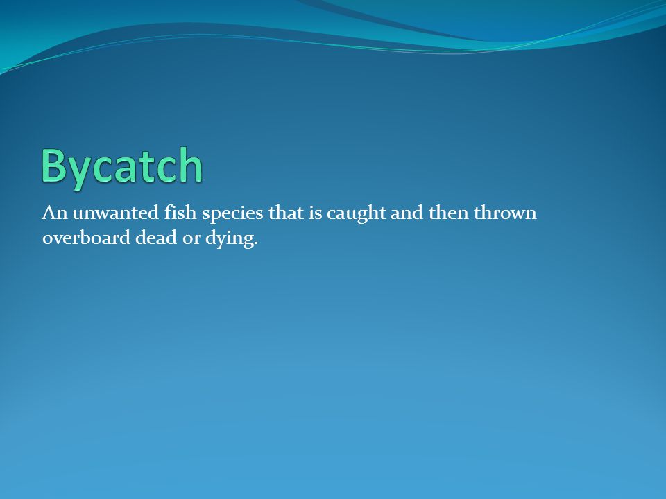 Bycatch An unwanted fish species that is caught and then thrown overboard dead or dying.