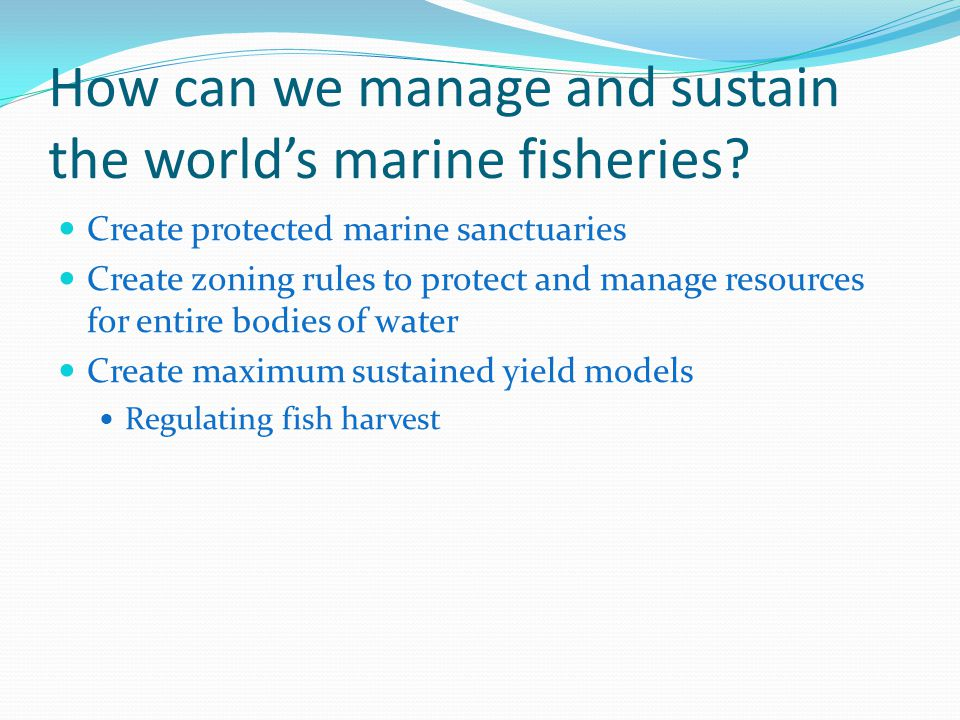 How can we manage and sustain the world's marine fisheries