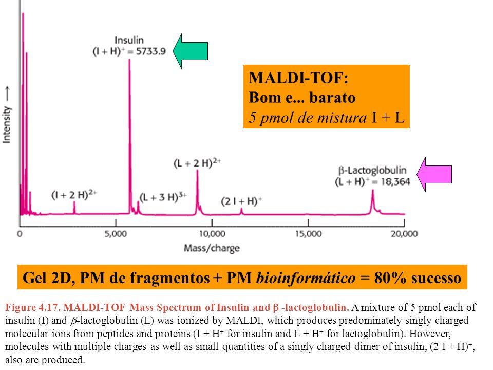 Gel 2D, PM de fragmentos + PM bioinformático = 80% sucesso