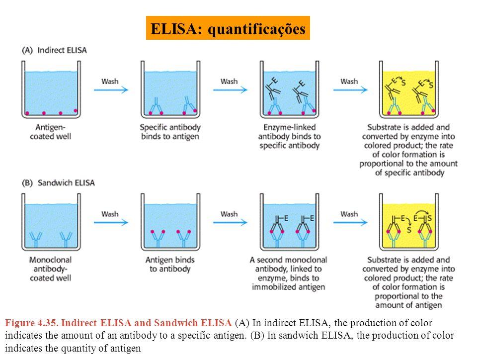 ELISA: quantificações