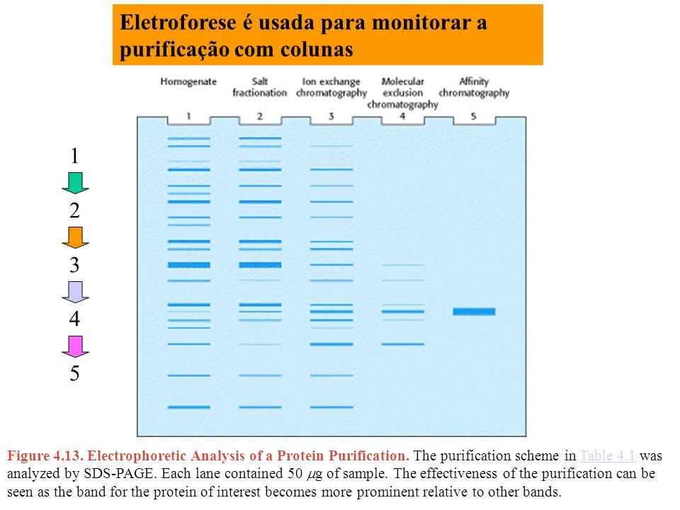 Eletroforese é usada para monitorar a purificação com colunas