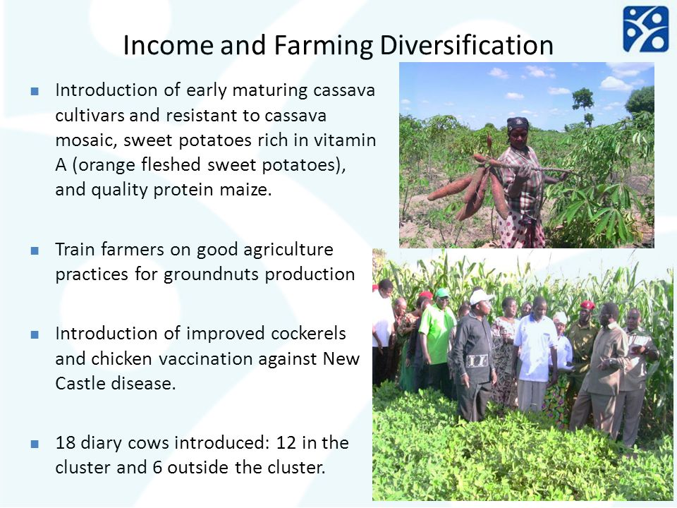 Income and Farming Diversification