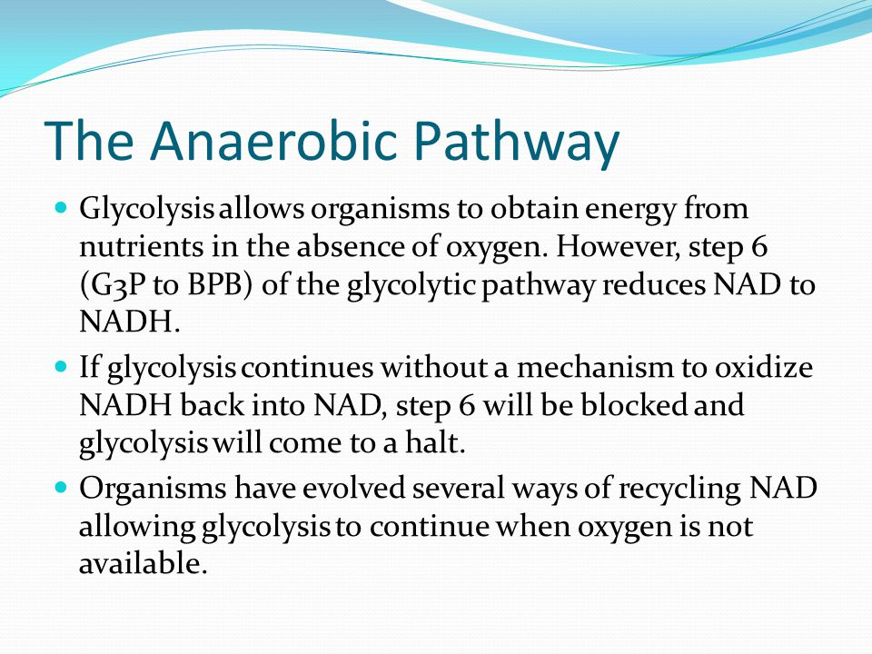 The Anaerobic Pathway