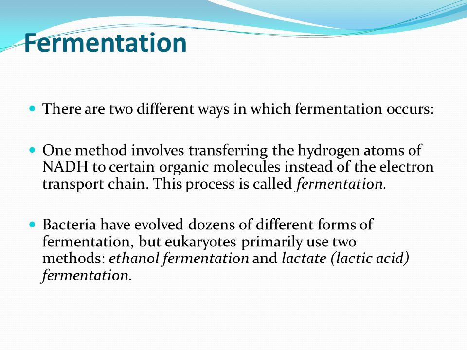 Fermentation There are two different ways in which fermentation occurs:
