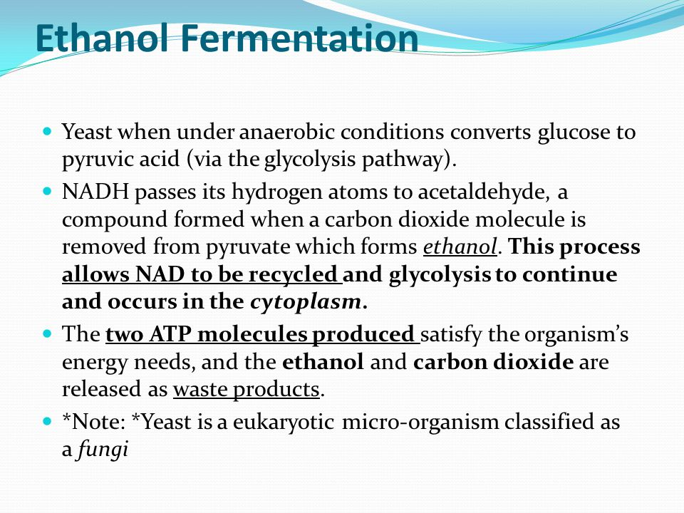 Ethanol Fermentation Yeast when under anaerobic conditions converts glucose to pyruvic acid (via the glycolysis pathway).
