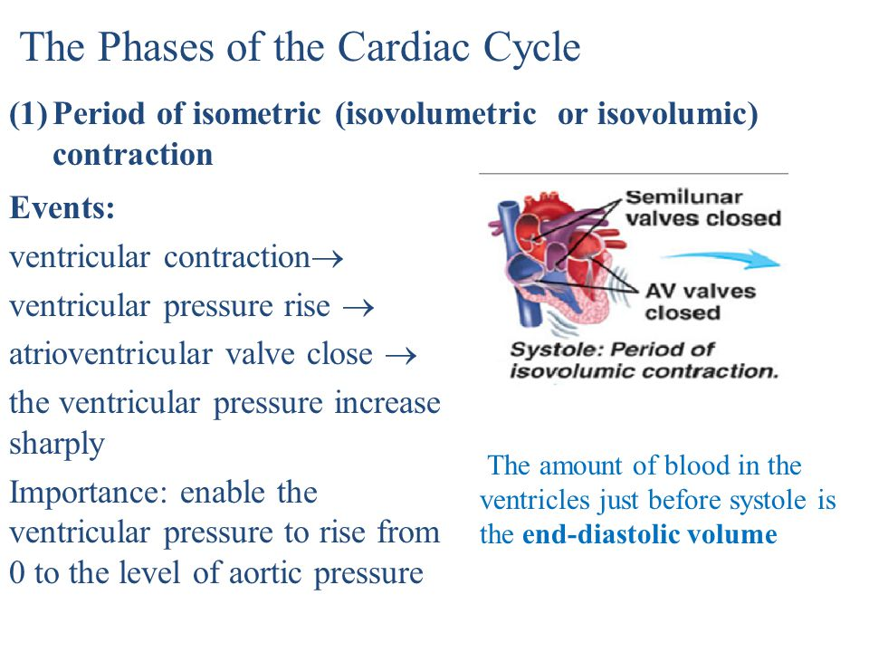 The Phases of the Cardiac Cycle
