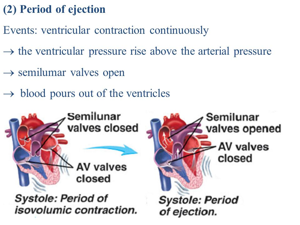 (2) Period of ejection Events: ventricular contraction continuously. the ventricular pressure rise above the arterial pressure.