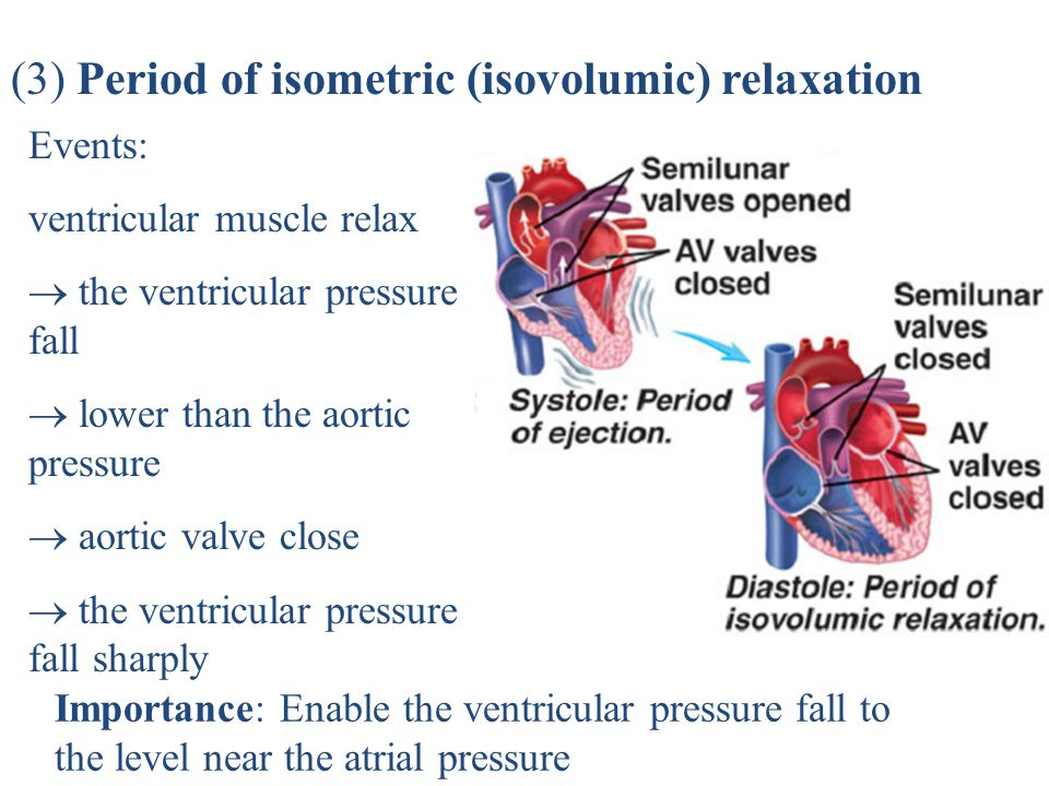 (3) Period of isometric (isovolumic) relaxation
