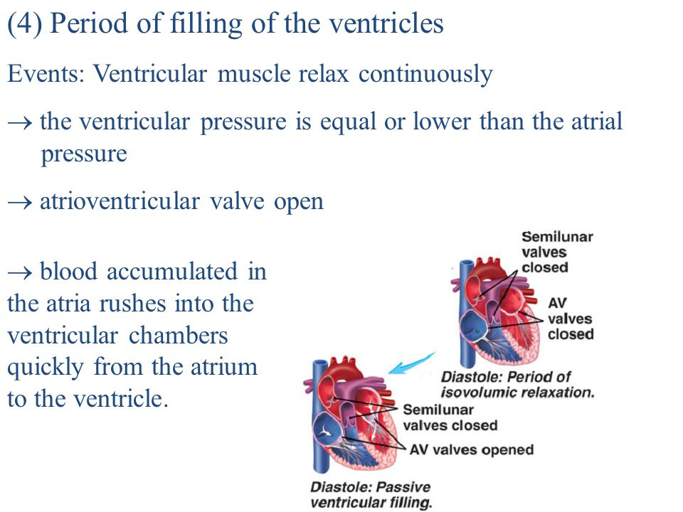 (4) Period of filling of the ventricles