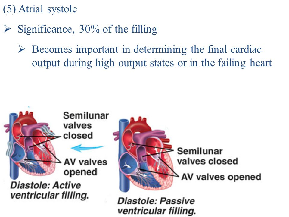 (5) Atrial systole Significance, 30% of the filling.