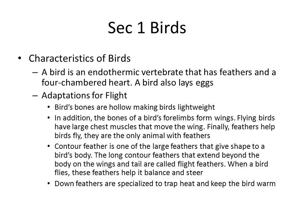 Sec 1 Birds Characteristics of Birds