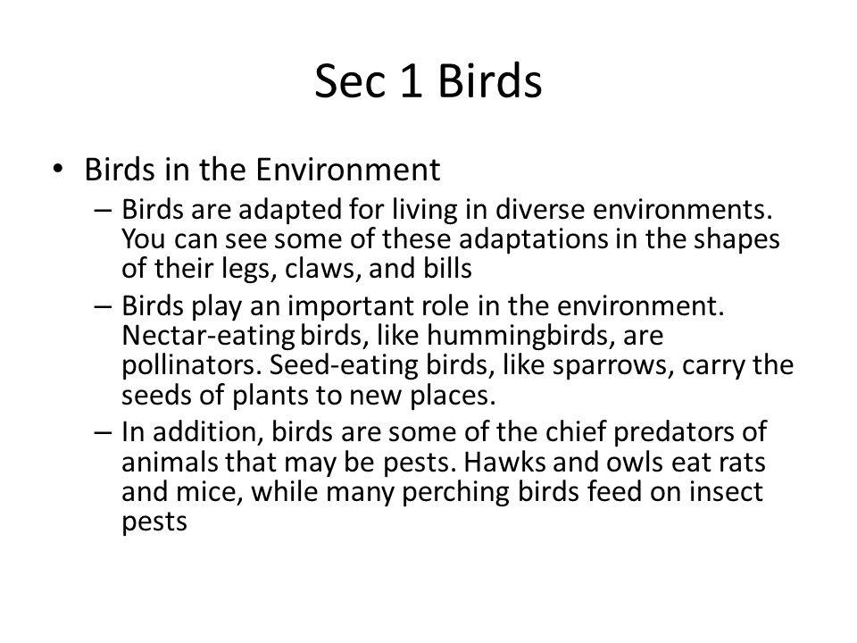 Sec 1 Birds Birds in the Environment