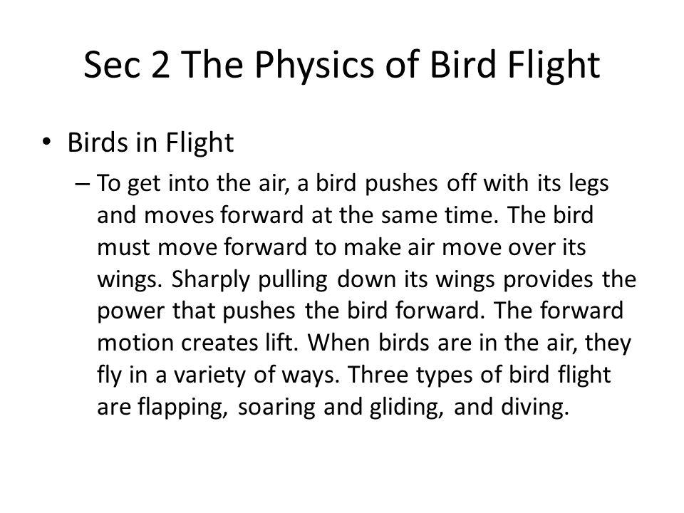 Sec 2 The Physics of Bird Flight