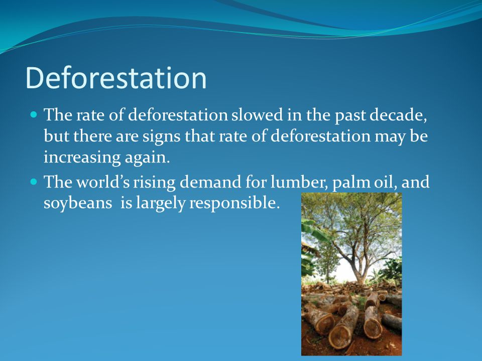 Deforestation The rate of deforestation slowed in the past decade, but there are signs that rate of deforestation may be increasing again.