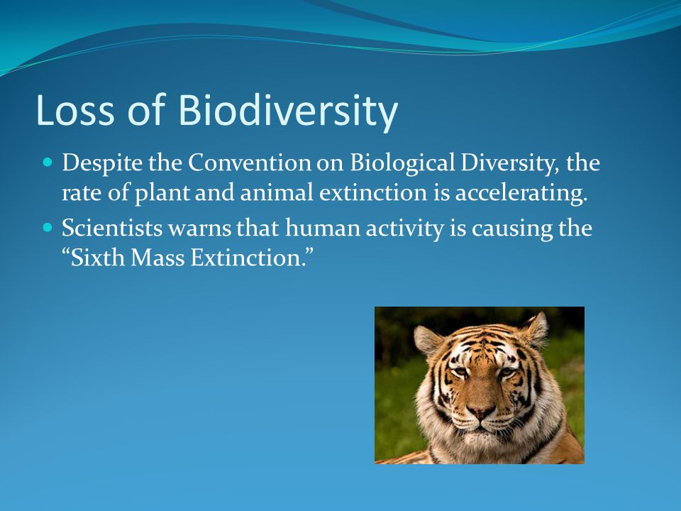 Loss of Biodiversity Despite the Convention on Biological Diversity, the rate of plant and animal extinction is accelerating.