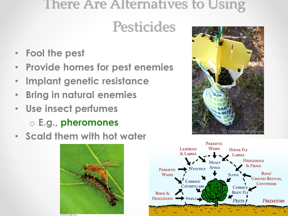 There Are Alternatives to Using Pesticides