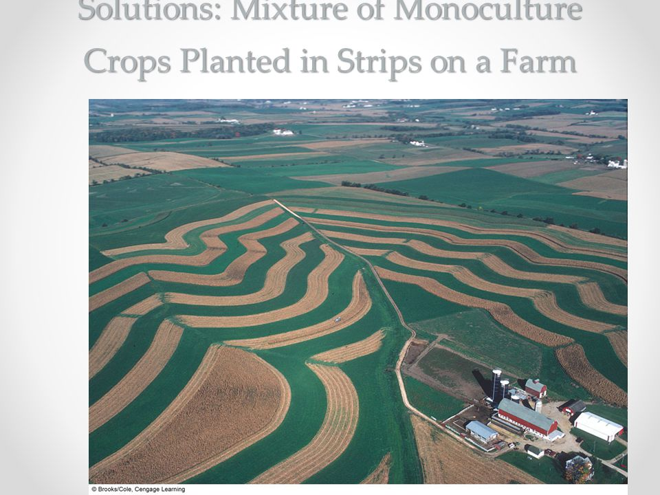 Solutions: Mixture of Monoculture Crops Planted in Strips on a Farm