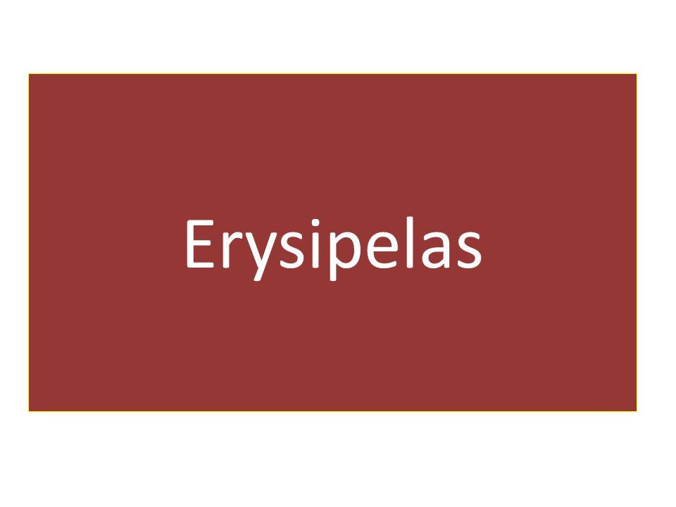 Erysipelas