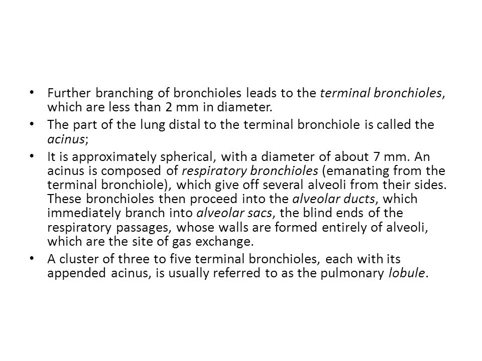 Further branching of bronchioles leads to the terminal bronchioles, which are less than 2 mm in diameter.