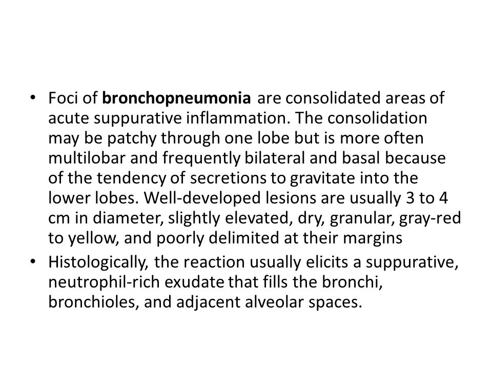 Foci of bronchopneumonia are consolidated areas of acute suppurative inflammation. The consolidation may be patchy through one lobe but is more often multilobar and frequently bilateral and basal because of the tendency of secretions to gravitate into the lower lobes. Well-developed lesions are usually 3 to 4 cm in diameter, slightly elevated, dry, granular, gray-red to yellow, and poorly delimited at their margins