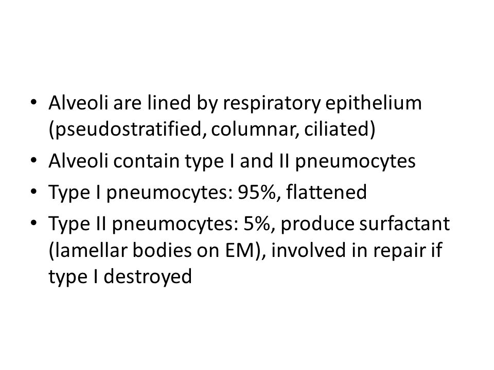 Alveoli are lined by respiratory epithelium (pseudostratified, columnar, ciliated)
