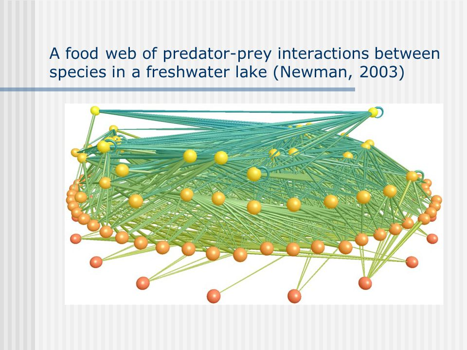 A food web of predator-prey interactions between species in a freshwater lake (Newman, 2003)