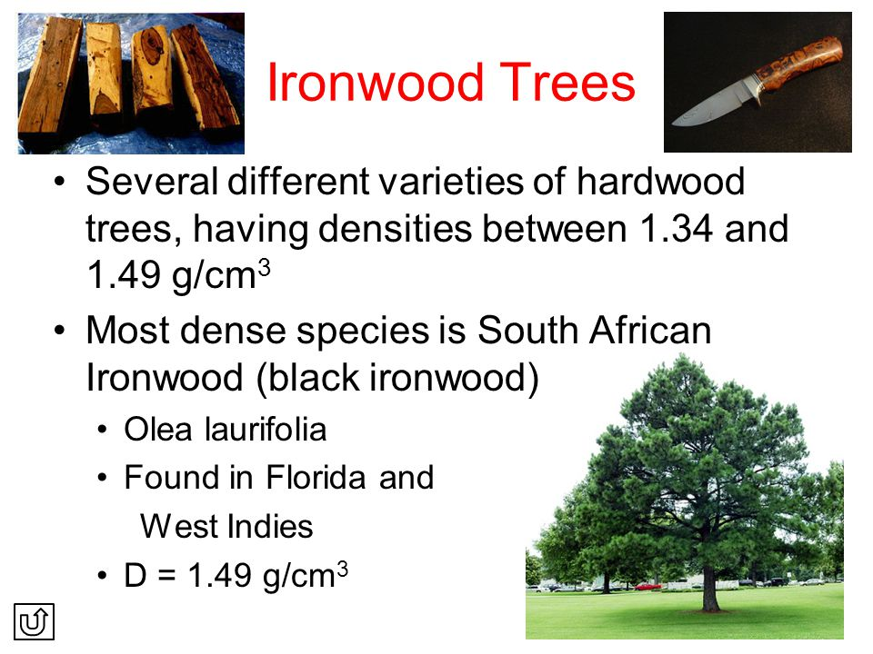 Ironwood Trees Several different varieties of hardwood trees, having densities between 1.34 and 1.49 g/cm3.