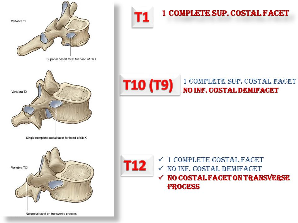 T1 T10 (T9) T12 1 COMPLETE SUP. COSTAL FACET