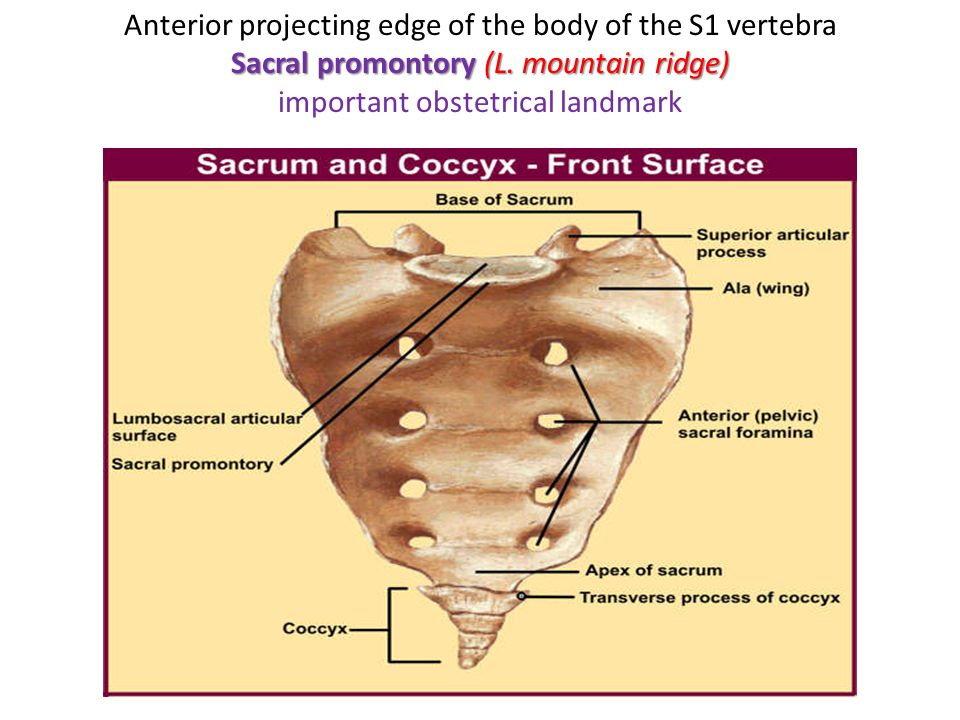 Anterior projecting edge of the body of the S1 vertebra