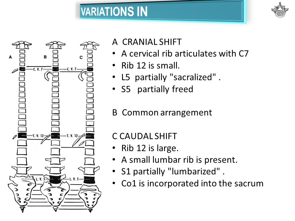 VARIATIONS IN VERTEBRAE
