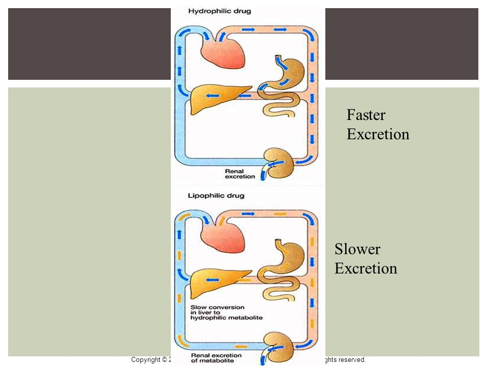 Faster Excretion Slower Excretion