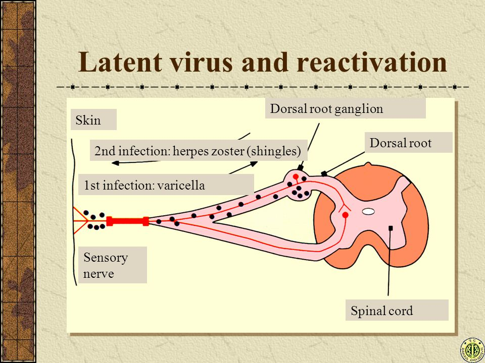 Latent virus and reactivation