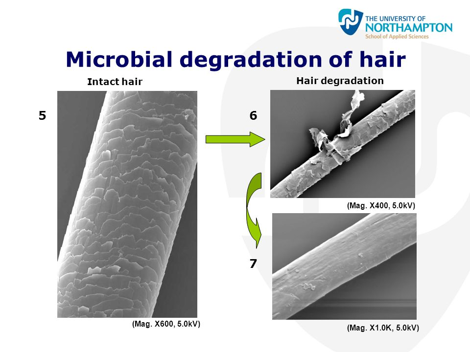 Microbial degradation of hair