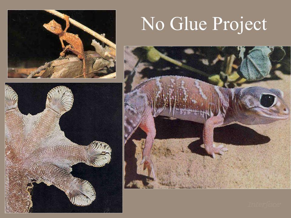 No Glue Project