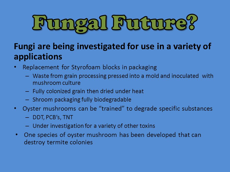 Fungal Future Fungi are being investigated for use in a variety of applications. Replacement for Styrofoam blocks in packaging.