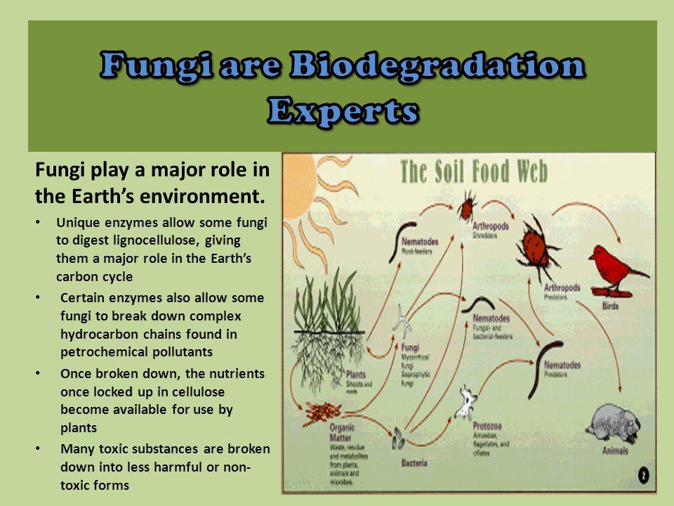 Fungi are Biodegradation Experts