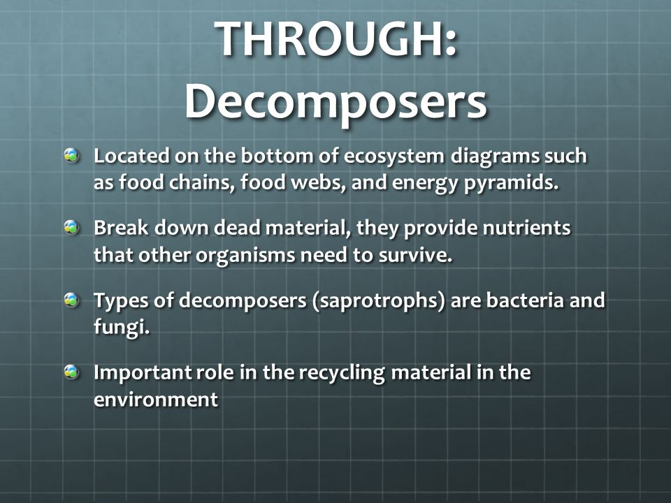 THROUGH: Decomposers Located on the bottom of ecosystem diagrams such as food chains, food webs, and energy pyramids.
