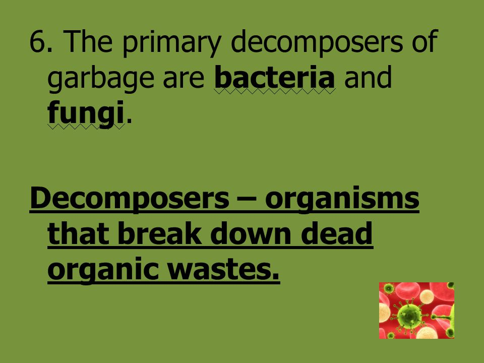 6. The primary decomposers of garbage are bacteria and fungi.