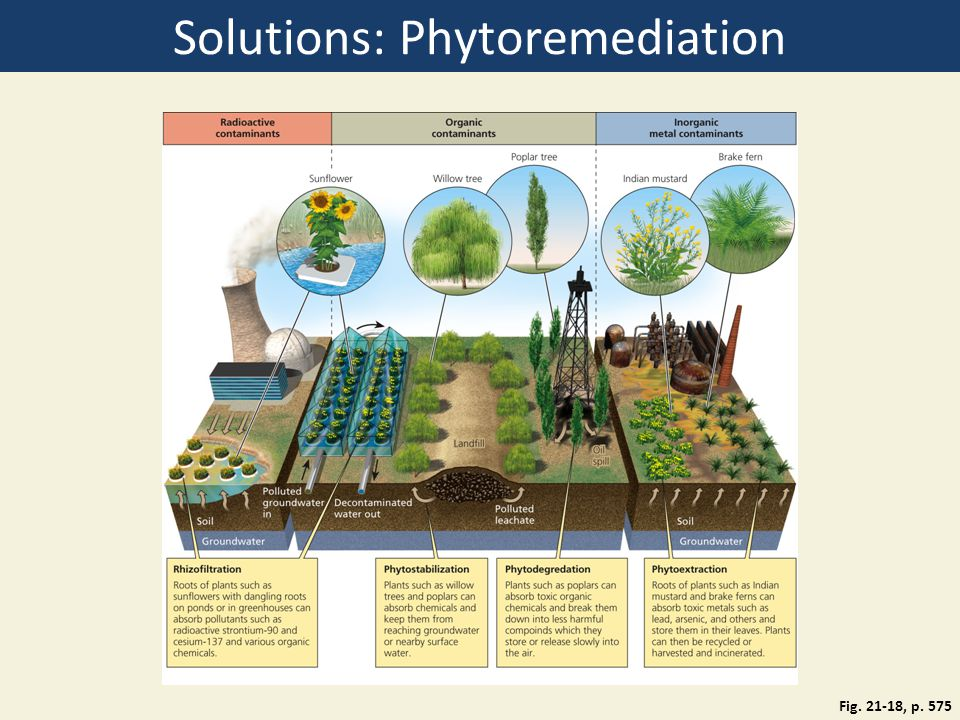 Solutions: Phytoremediation