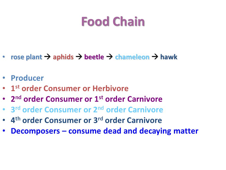 Food Chain Producer 1st order Consumer or Herbivore
