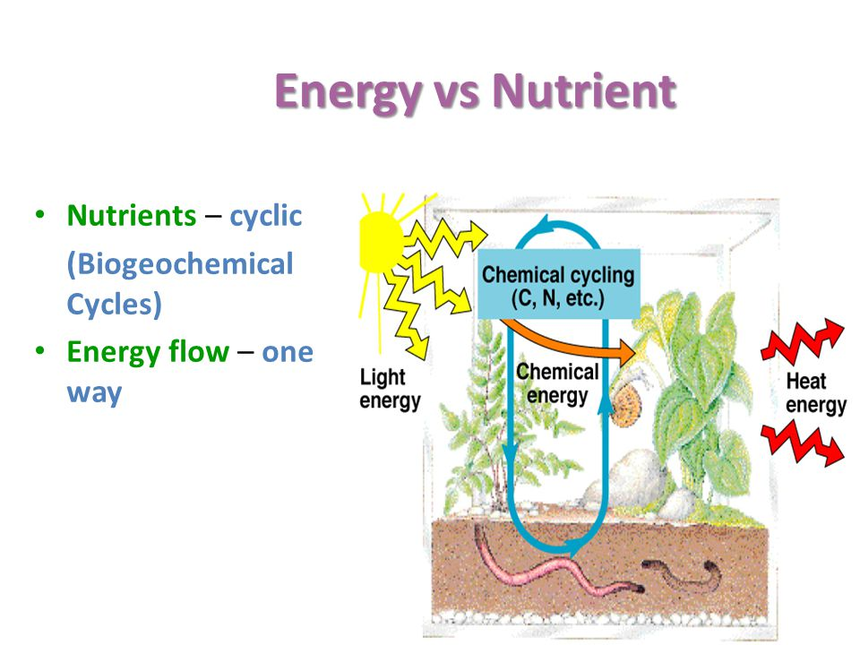 Energy vs Nutrient Nutrients – cyclic (Biogeochemical Cycles)