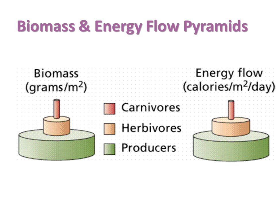 Biomass & Energy Flow Pyramids